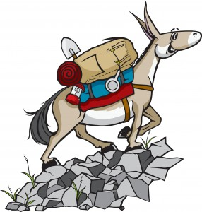 An Educated Mule
